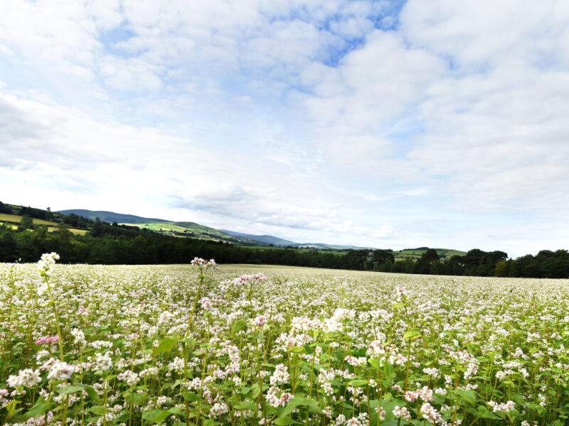The Bee Sanctuary Of Ireland