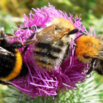 Queen Bee Donation